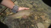 trout_ronsfishing