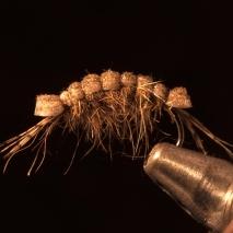 Killer Shrimp-fly of the week