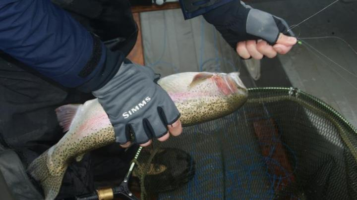 Kieron Jenkins unhooking a Fish Blagdon