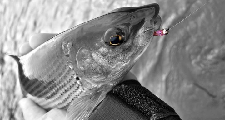 Kieron Jenkins Grayling Fishing